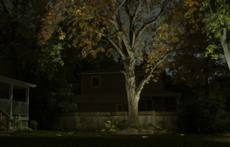 trees illuminated - Hamilton property