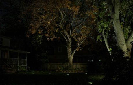 illuminated trees - oakville property
